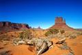 Картинка песок, деревья, скалы, пустыня, сухие, каньон