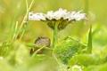 Картинка цветок, капли, макро, роса, лягушка