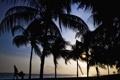 Картинка пляж, закат, пальмы