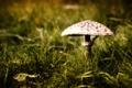 Картинка природа, фон, гриб