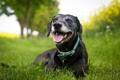 Картинка зелень, трава, лето, собака