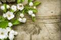 Картинка цветы, весна, лепестки, белые