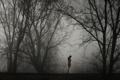 Картинка девушка, деревья, туман, одиночество