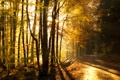 Картинка Солнце, Дорога, Осень, Деревья, Лес, Лучи, Nature