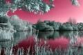 Картинка лето, пейзаж, озеро, цвет