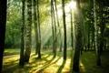Картинка природа, дорожка, свет, парк, деревья