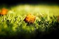 Картинка осень, трава, листик, боке