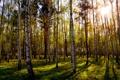 Картинка зелень, трава, листья, солнце, природа, день, роща