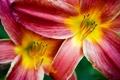 Картинка макро, цветы, лепестки, прогулки по парку
