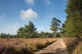 Картинка дорога, поле, лето, пейзаж