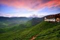Картинка malaysia, tanah rata, cameon hills