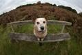 Картинка друг, скамья, собака