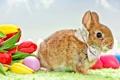 Картинка цветы, праздник, кролик, пасха, тюльпаны, бантик, яички