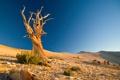 Картинка песок, камни, холмы, пустыня, коряга, Пейзаж, сухое дерево