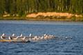 Картинка море, птицы, чайки, россия