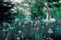 Картинка природа, лес, лето