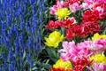 Картинка цветы, яркие, клумба