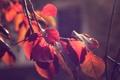 Картинка осень, листья, макро, ветки, природа, ветви