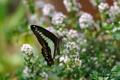 Картинка цветы, бабочка, размытость