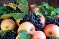 Картинка осень, виноград, яблоки