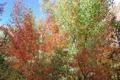 Картинка листья, осень, небо, багрянец, деревья