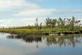 Картинка деревья, озеро, семья, лебеди