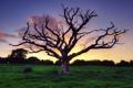 Картинка небо, трава, закат, природа, дерево, сухое