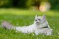 Картинка кошка, трава, кот