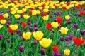 Картинка листья, лепестки, сад, луг, тюльпаны