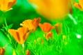 Картинка луг, трава, лепестки, цветы