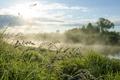 Картинка трава, пейзаж, туман, река