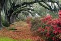Картинка листья, Charleston, Magnolia, South Carolina, магнолии