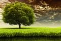 Картинка поле, природа, дерево, травка