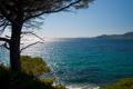 Картинка море, волны, дерево, берег, хвоя, солнечно