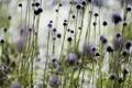 Картинка макро, свет, цветы, природа, блики, фото, фон