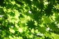 Картинка природа, листва, ветка, весна