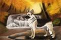 Картинка осень, вода, деревья, река, камни, собака