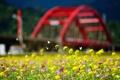 Картинка город, цветы, лето