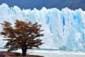 Картинка природа, дерево, лёд