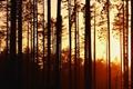 Картинка солнце, лучи, свет, деревья, природа, фото, фон