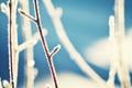 Картинка зима, ветки, колорадо