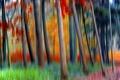 Картинка лес, деревья, краски, размытость, спецэффект