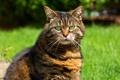 Картинка зелень, кошка, трава, глаза, кот, взгляд, зеленые