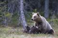 Картинка лес, природа, медведи