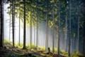 Картинка лес, природа, стволы