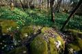 Картинка лес, цветы, природа, камни, мох