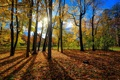 Картинка осень, лес, листья, солнце, деревья, стволы