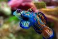 Картинка море, вода, природа, цвет, рыбка, рыба