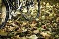 Картинка осень, листья, велосипед