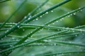 Картинка зелень, трава, капли, макро, роса, обои